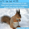 squirrels plant thousands of trees each year wtf