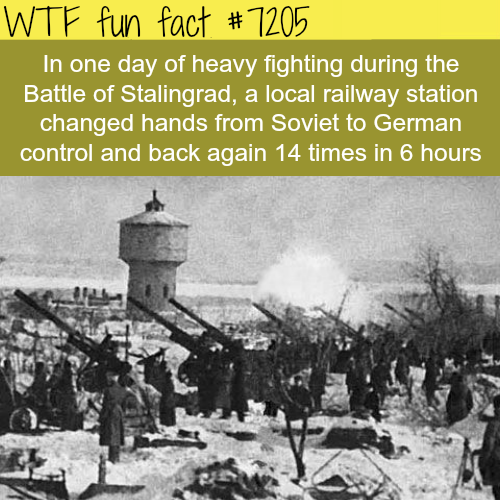 Stalingrad battle - WTF Fun Fact