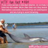 stranded dolphins wtf fun facts