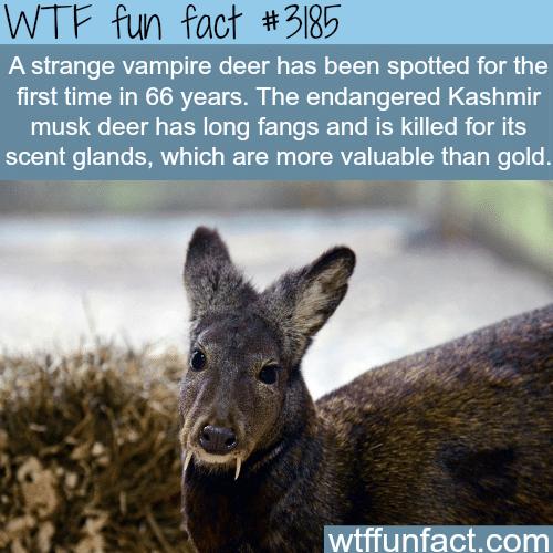 Strange Vampire Deer
