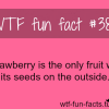 strawberry facts
