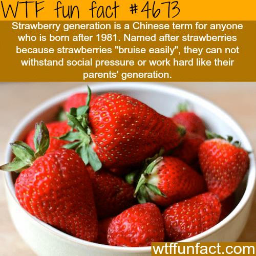 Strawberry Generation - WTF fun facts