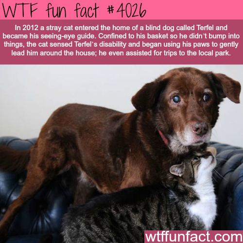 Stray cat becomes the assistant of a blind dog - WTF fun facts