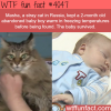 stray cat helps a baby boy survive in freezing