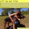 stray dog saves the life of women wtf fun facts