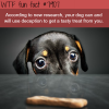 study finds that dogs will use deception wtf fun