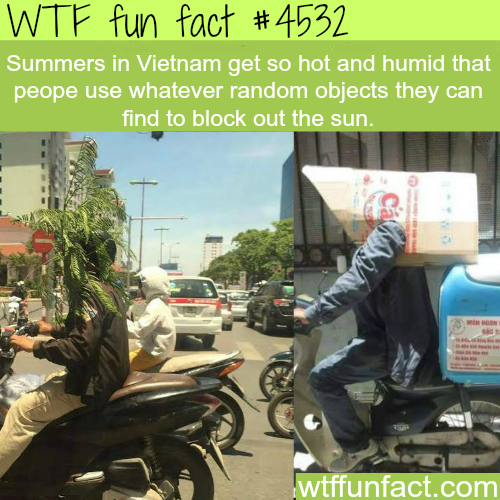 Summers in Vietnam -   WTF fun facts