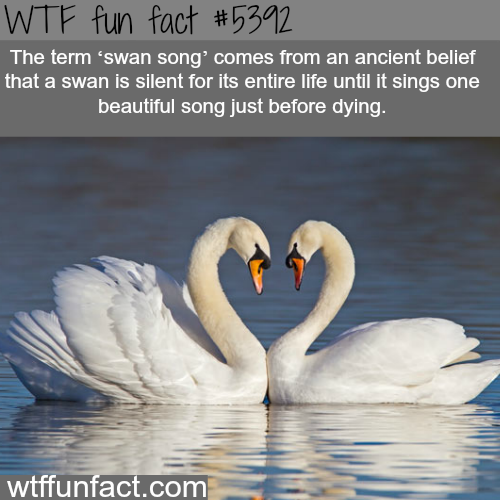 Swan song - WTF fun facts
