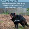 tasmanian devils wtf fun facts