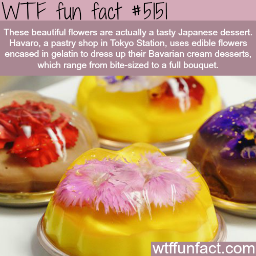 Tasty Japanese dessert that look like flowers - WTF fun facts