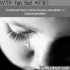 tears can act as a painkiller wtf fun facts