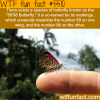 the 8998 butterfly wtf fun facts