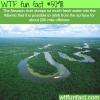 the amazon river wtf fun facts