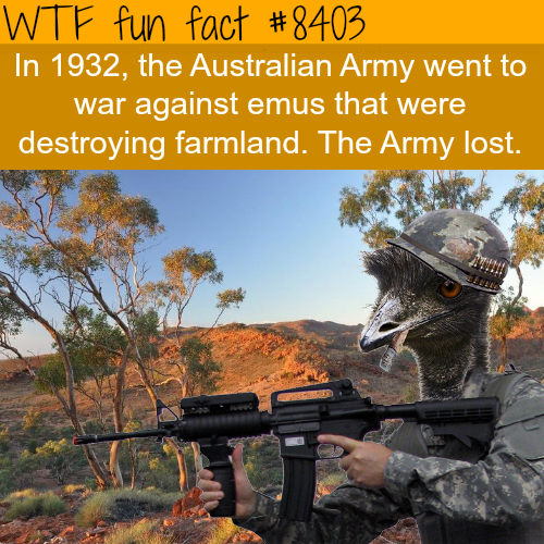 The Australian army fought a war against the emus and lost - WTF fun facts