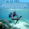 the bajau people sea nomads wtf fun facts