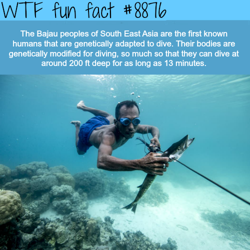 The Bajau People (Sea Nomads) - WTF fun facts