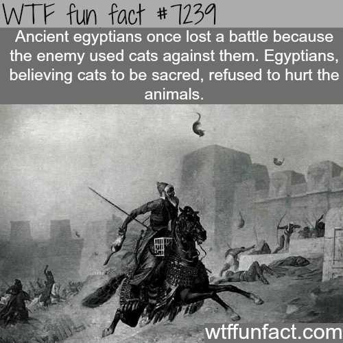 The Battle of Pelusium - WTF Fun Fact