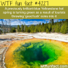 the beautiful blue yellowstone hot spring is turning