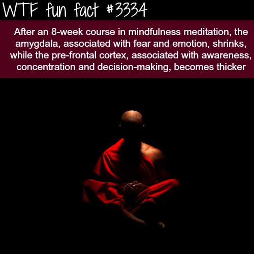 The benefit of meditation -WTF fun facts