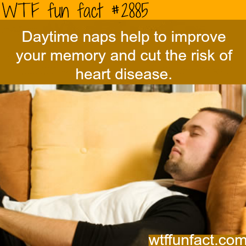 The benefits of daytime naps -WTF fun facts
