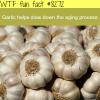 the benefits of garlic wtf fun facts