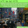 the benefits of walking wtf fun facts