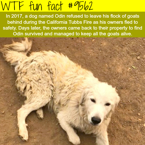 The best dog of the year - WTF fun fact