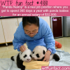 the best job in the world wtf fun facts