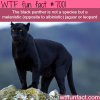 the black panther wtf fun facts