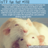 the cause of addiction wtf fun facts