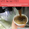 the cause of restaurant food poisonings wtf fun