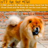 the closest dog to the wolf wtf fun facts