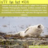 the comedy wildlife photography awards wtf fun