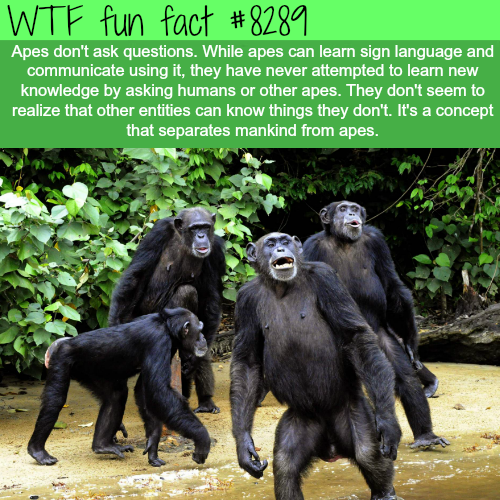 The concept that separates mankind from apes - WTF fun facts