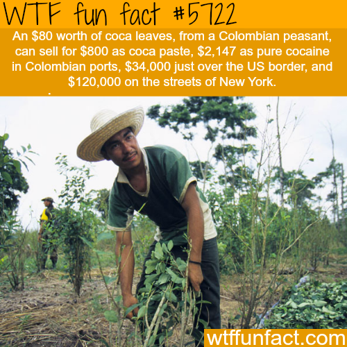 The cost of coca leaves - WTF fun facts