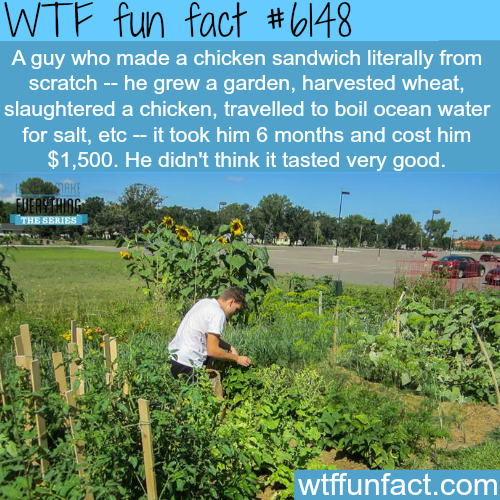 The cost of making a sandwich from scratch - WTF fun facts