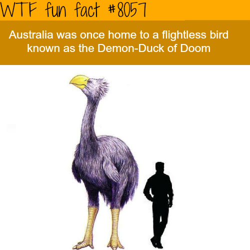 The Demon-Duck of Doom - WTF fun fact