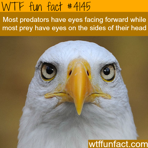 The difference between predator and prey -  WTF fun facts