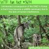the dmz in korea has some awesome wildlife wtf