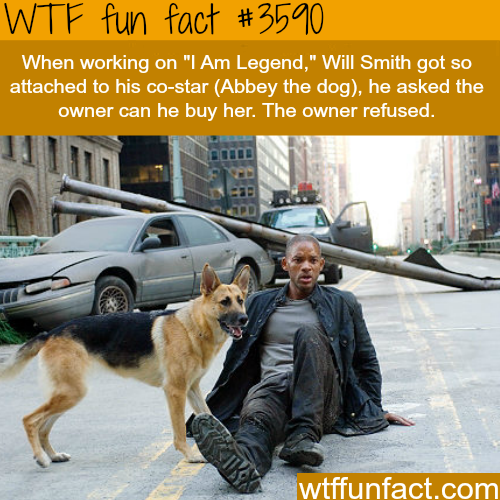 """The dog and Will Smith in """"I am legend"""" - WTF fun facts"""