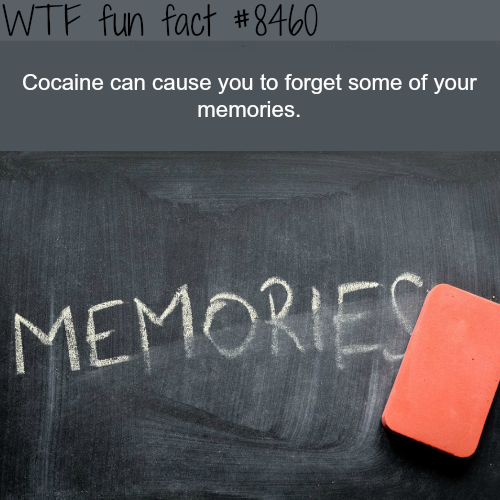 The effect of Cocaine on memories -WTF fun facts