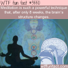 the effect of meditation on the brain wtf fun