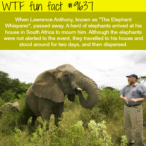 The Elephant Whisperer - WTF fun fact