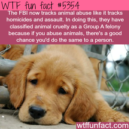 The FBI now tracks animal abuse - WTF fun facts