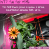 the first flower to bloom in space wtf fun facts