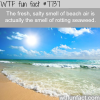 the fresh smell of the sea wtf fun facts