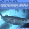 the greenland shark wtf fun facts
