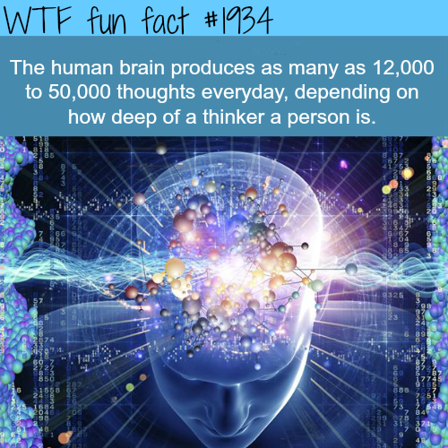 The human brain facts -WTF fun facts