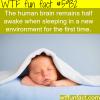 the human brain wtf fun facts