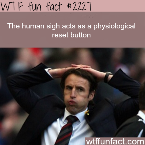 The Human sigh - WTF fun facts